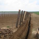příprava kapkové závlahy v nové vinici