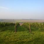 kapková závlaha ve vinici